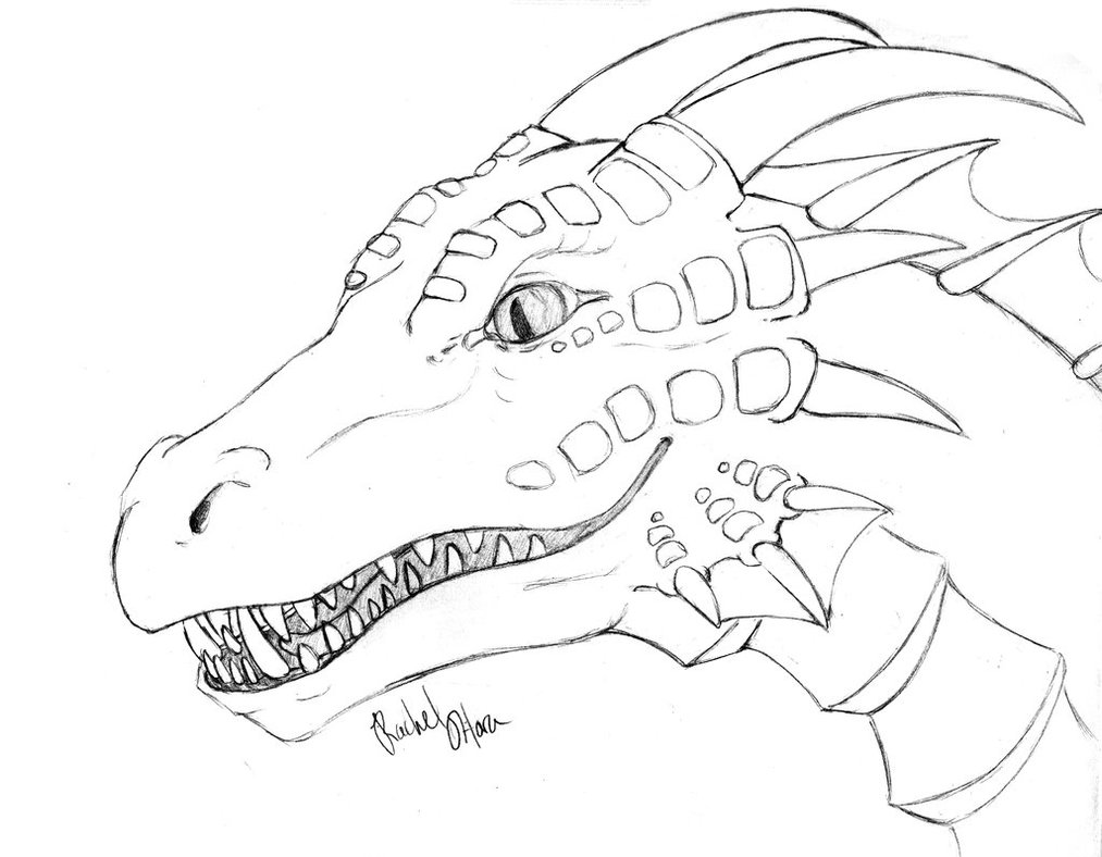 pictures of dragons to colour in dragon template animal templates free premium templates pictures to in of colour dragons