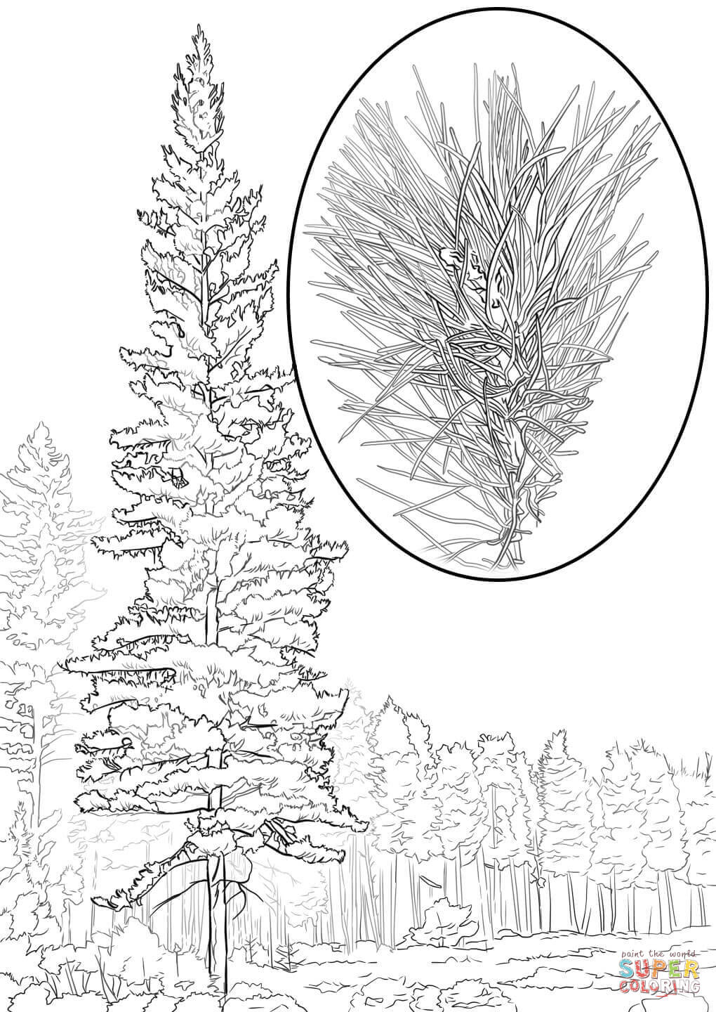 pine tree coloring pages coloring pages pine tree coloring home pages tree pine coloring