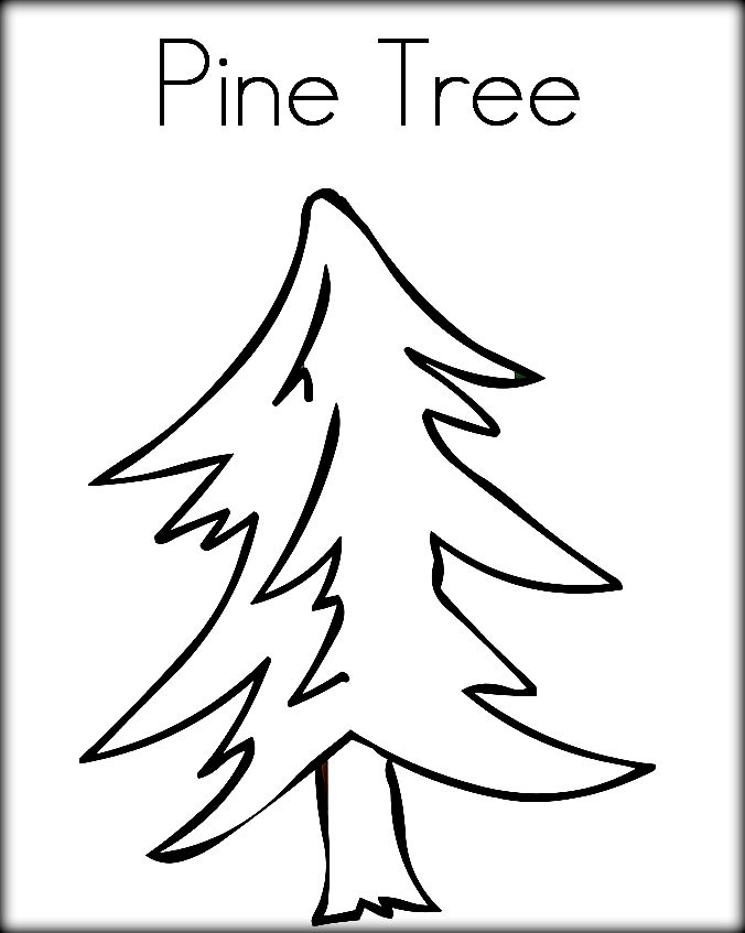 pine tree coloring pages pine tree drawings black and white sketch coloring page tree pine pages coloring