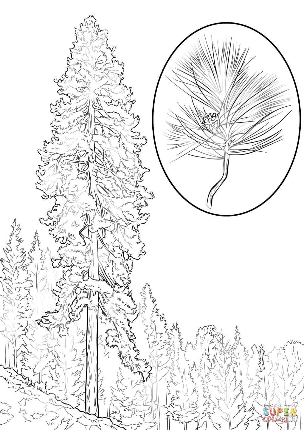 pine tree coloring pages red pine tree coloring page free printable coloring pages pages coloring tree pine