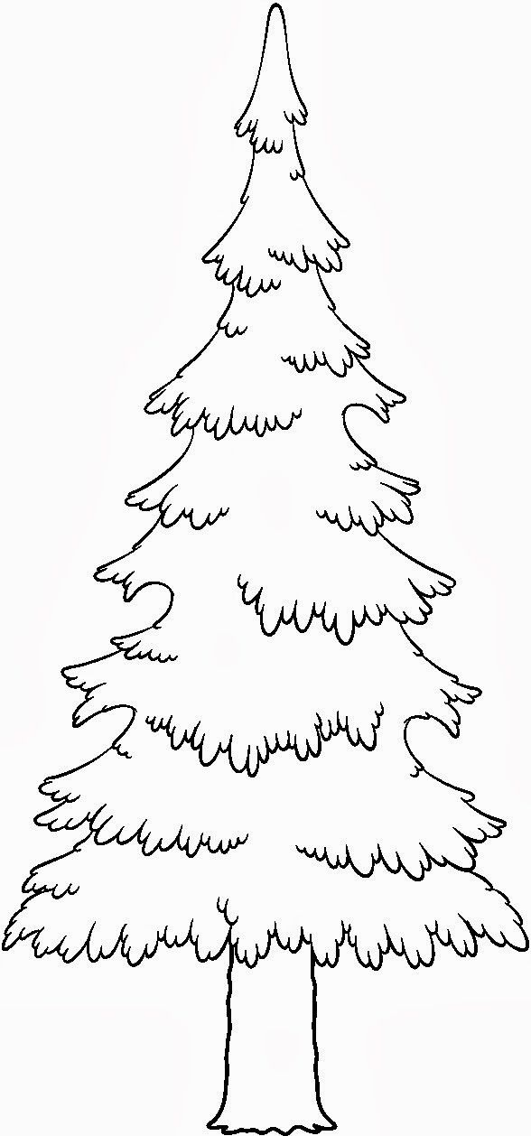 pine tree coloring pages white pine drawing at getdrawings free download coloring pine pages tree