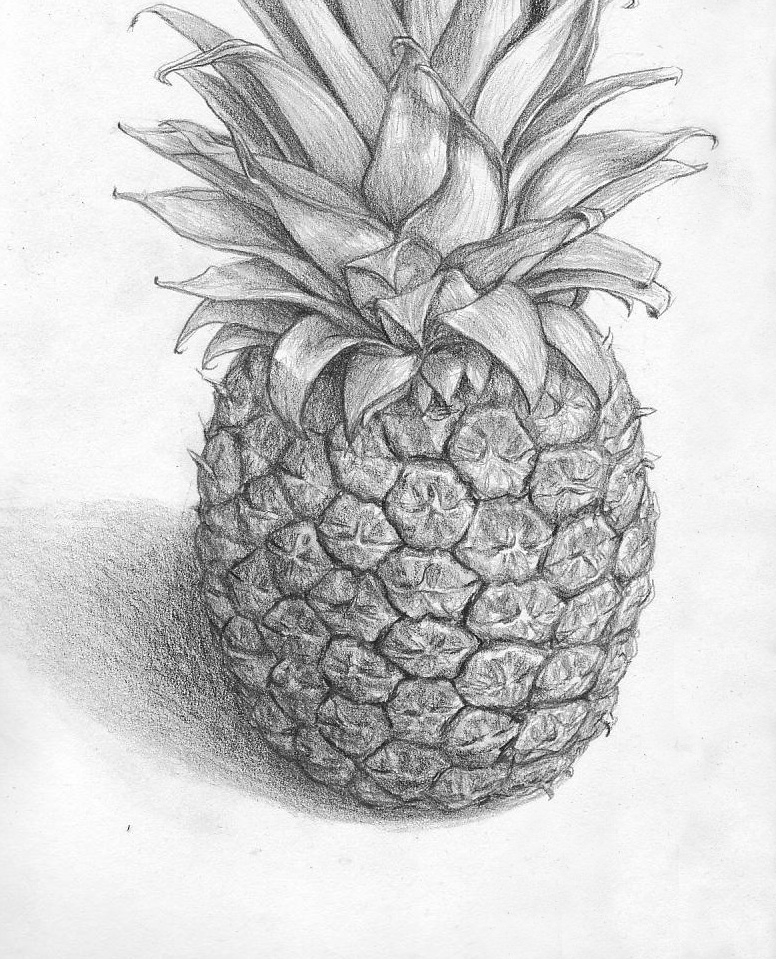 pineapple drawing completed pineapple by jinnybear on deviantart drawing pineapple