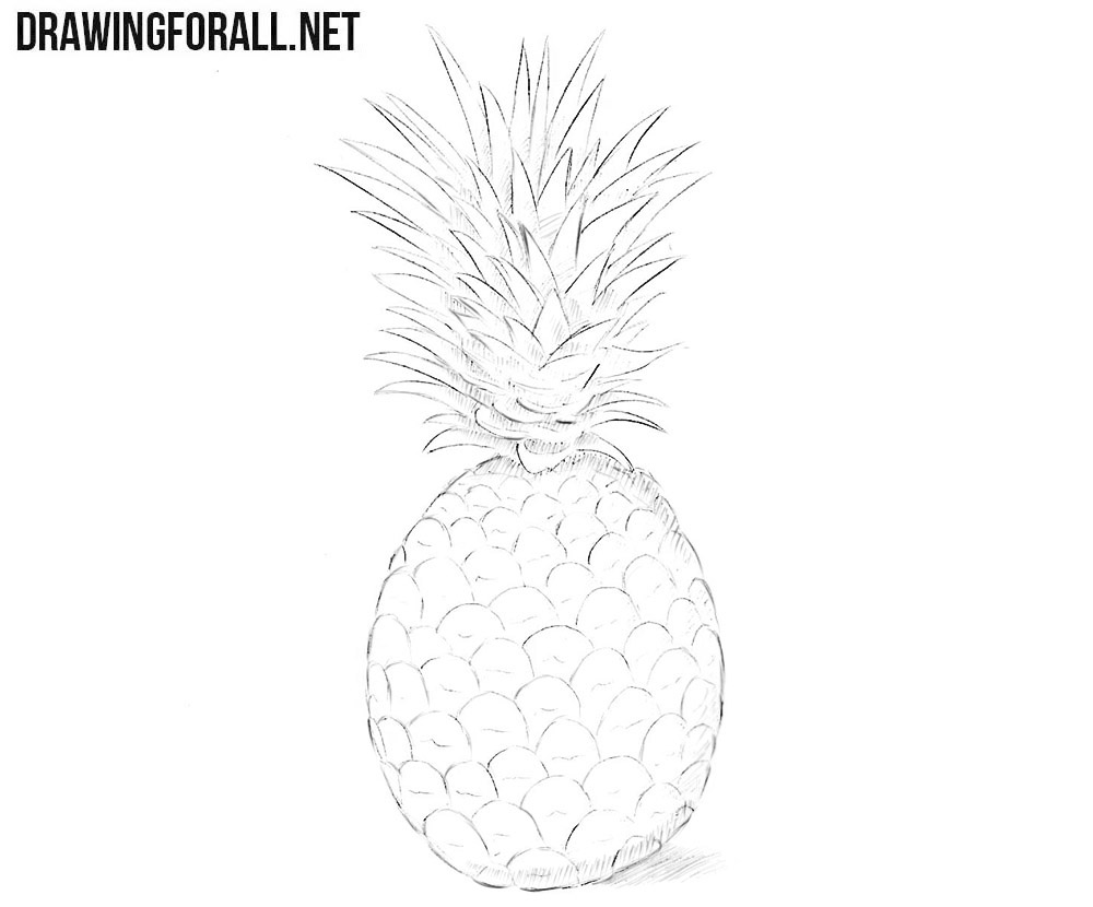 pineapple drawing how to draw a pineapple drawingforallnet pineapple drawing