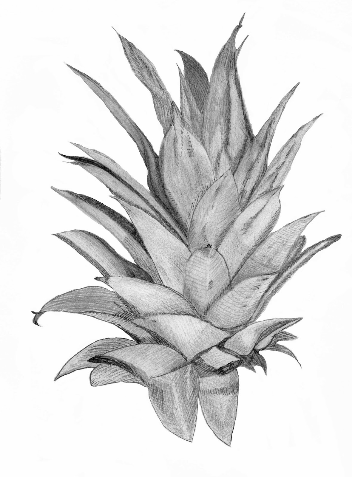 pineapple drawing pineapple black and white free download on clipartmag pineapple drawing
