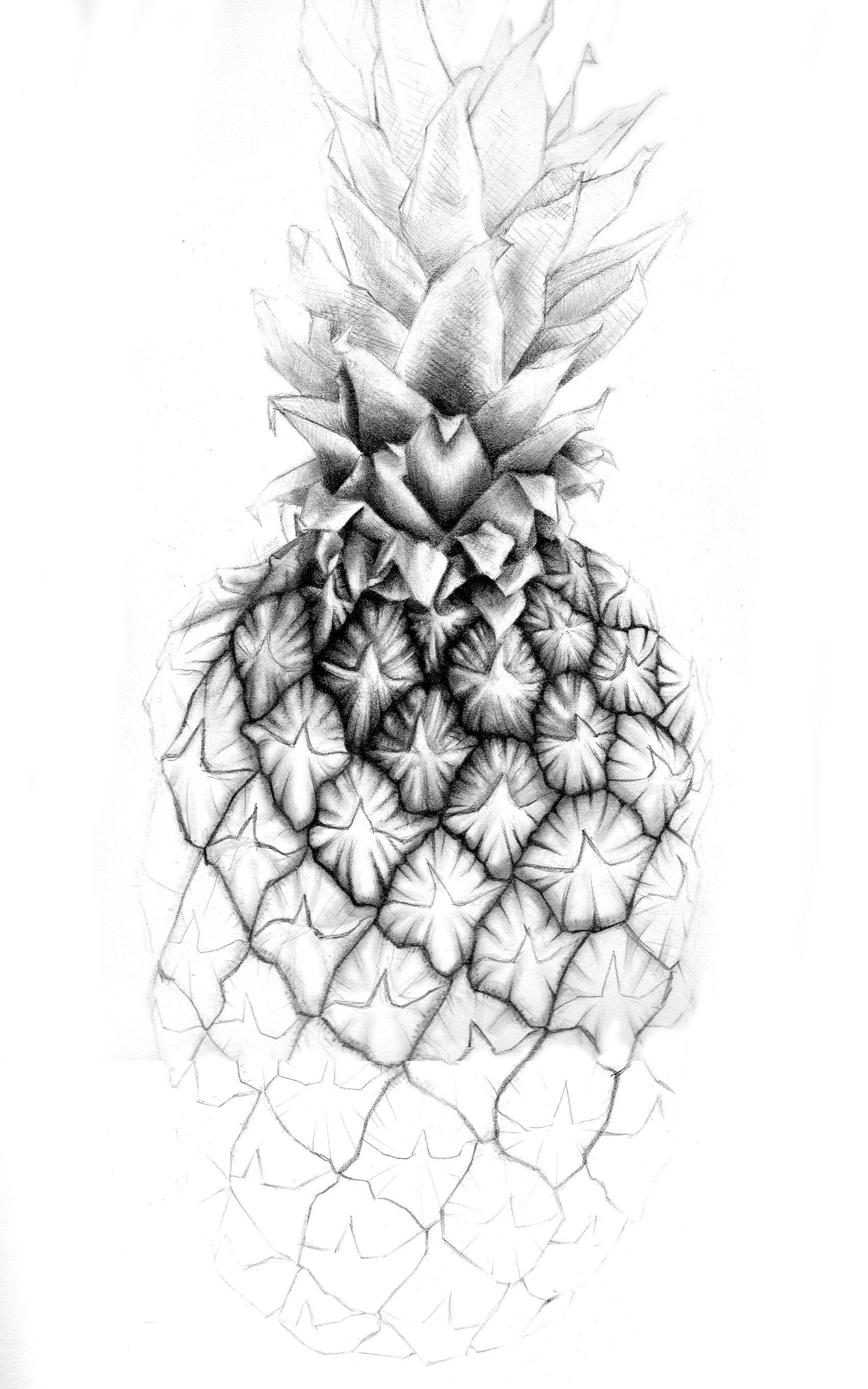pineapple drawing pineapple drawing at paintingvalleycom explore drawing pineapple