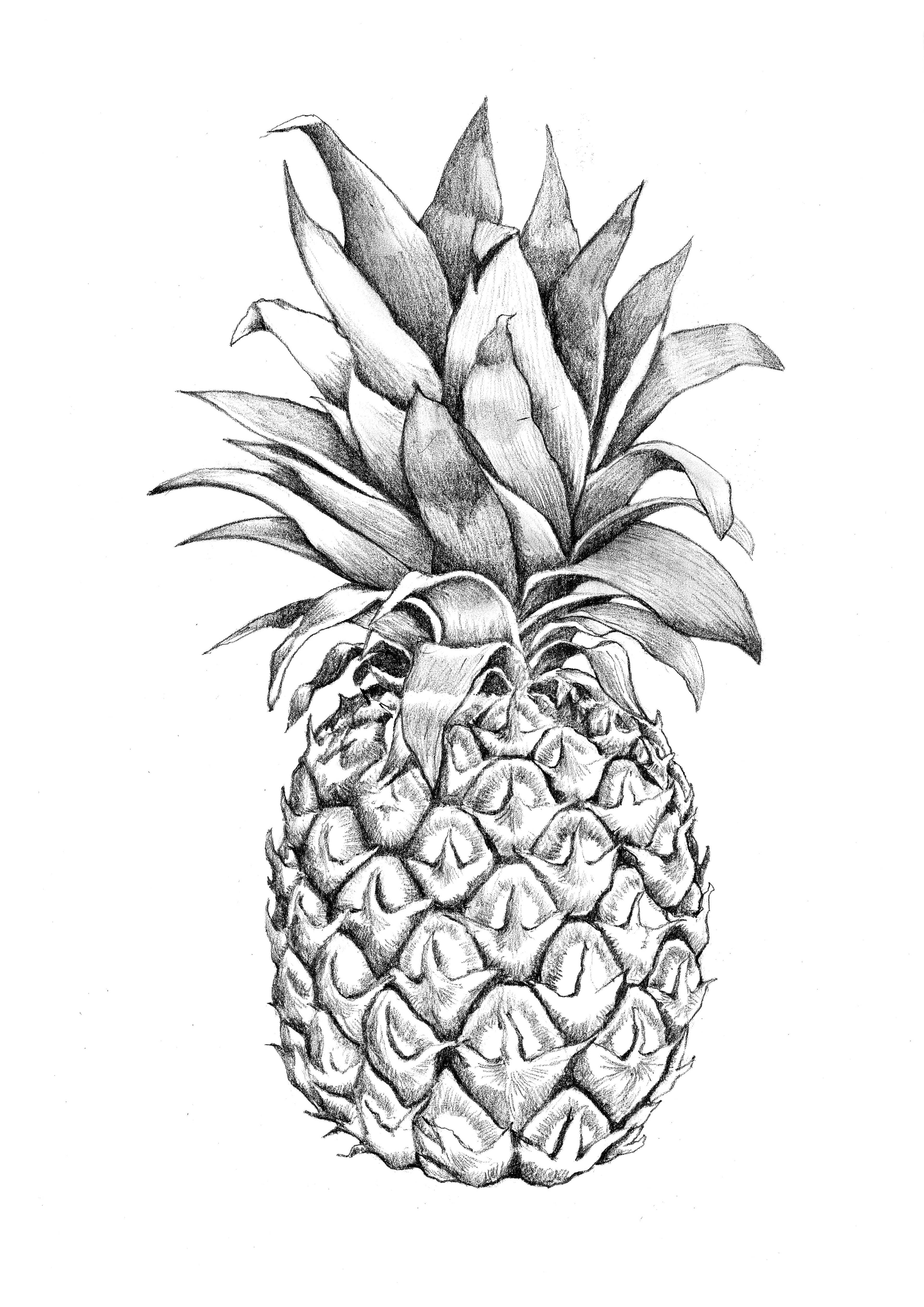 pineapple drawing pineapple drawing by banvivirie on deviantart drawing pineapple