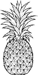 pineapple drawing pineapple drawings related keywords suggestions pineapple drawing