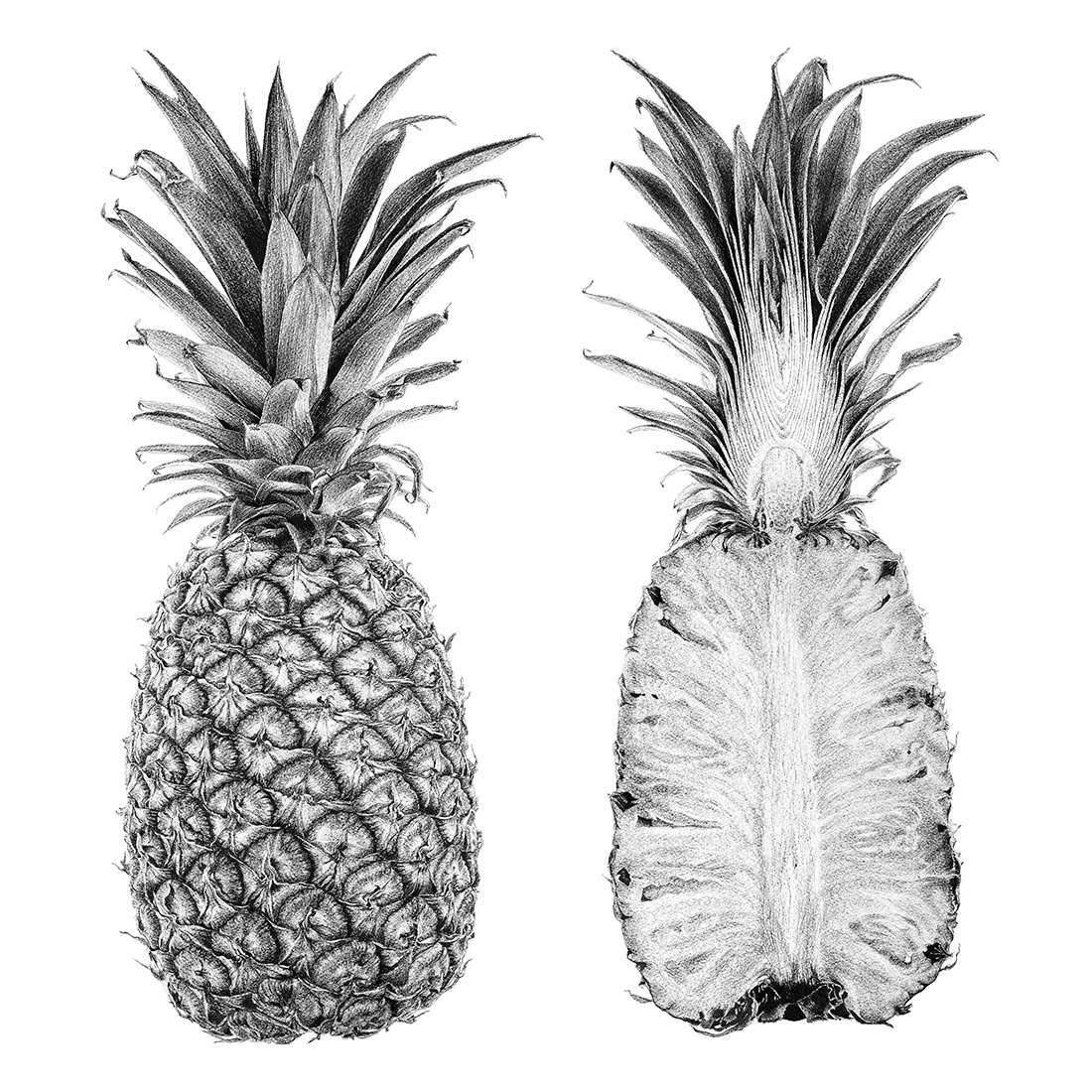 pineapple drawing pineapple ink drawing free transparent png 1200232 pineapple drawing
