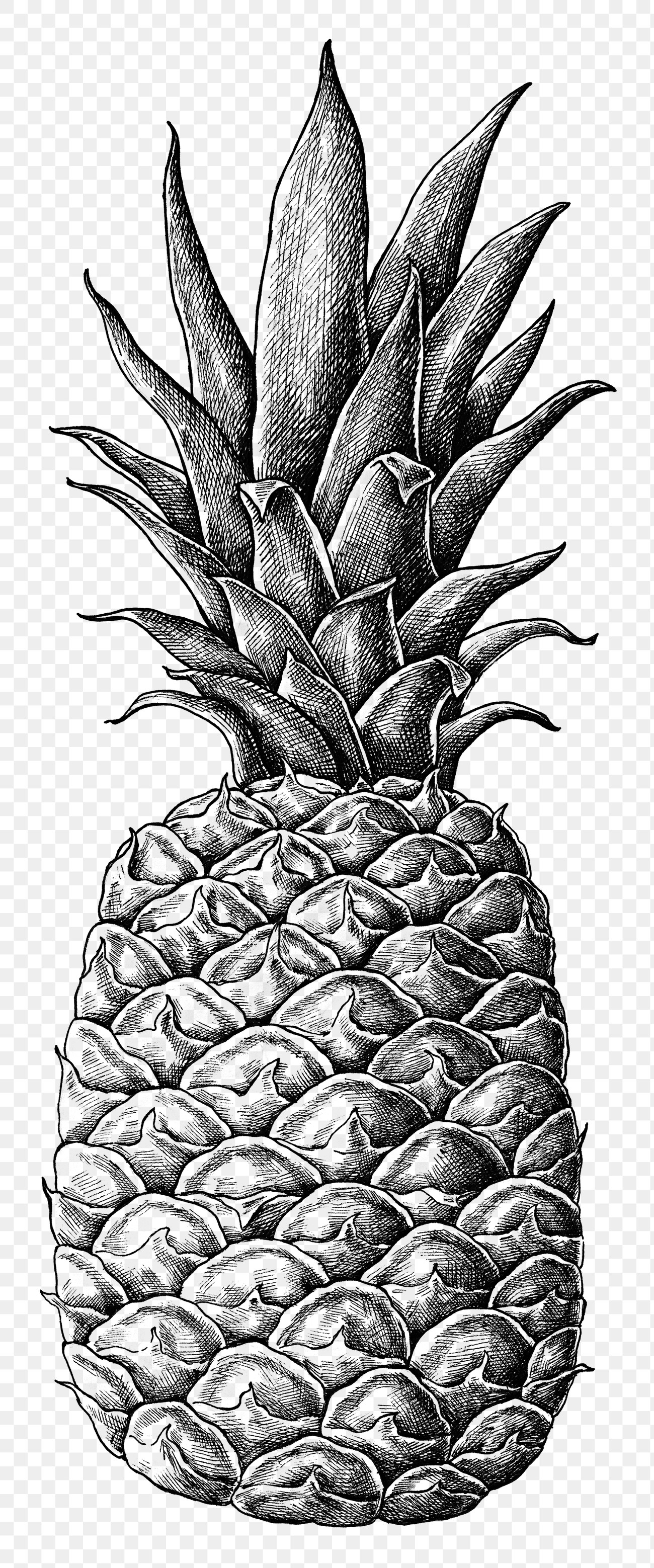 pineapple drawing pineapple line drawing at paintingvalleycom explore drawing pineapple