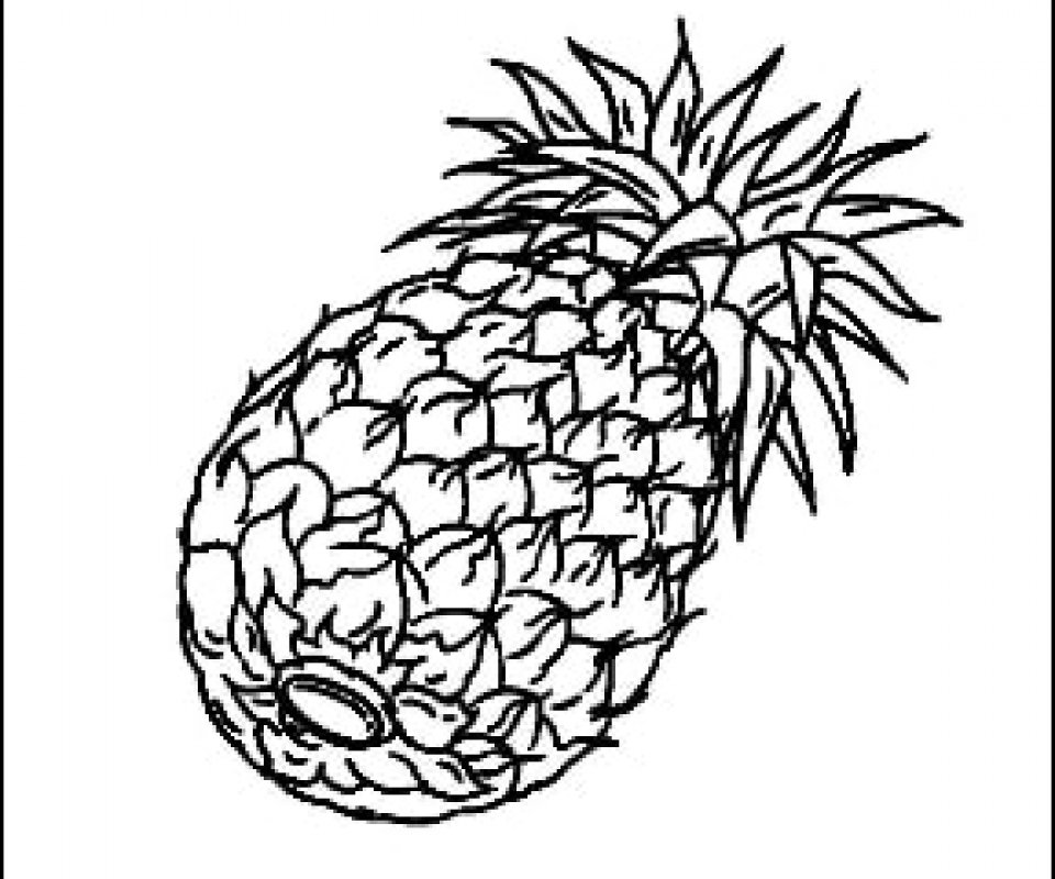 pineapple drawing pineapple outline drawing at getdrawings free download pineapple drawing