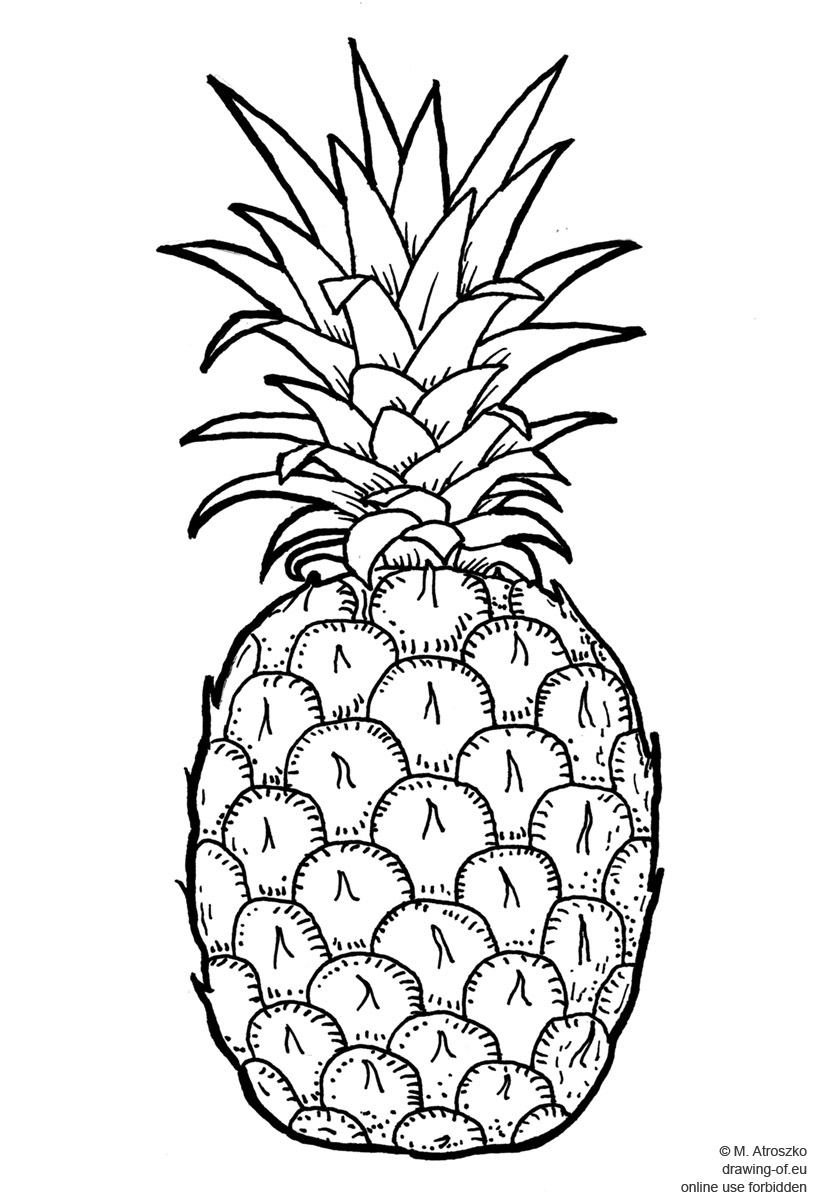 pineapple drawing simple pineapple drawing sketch coloring page pineapple drawing