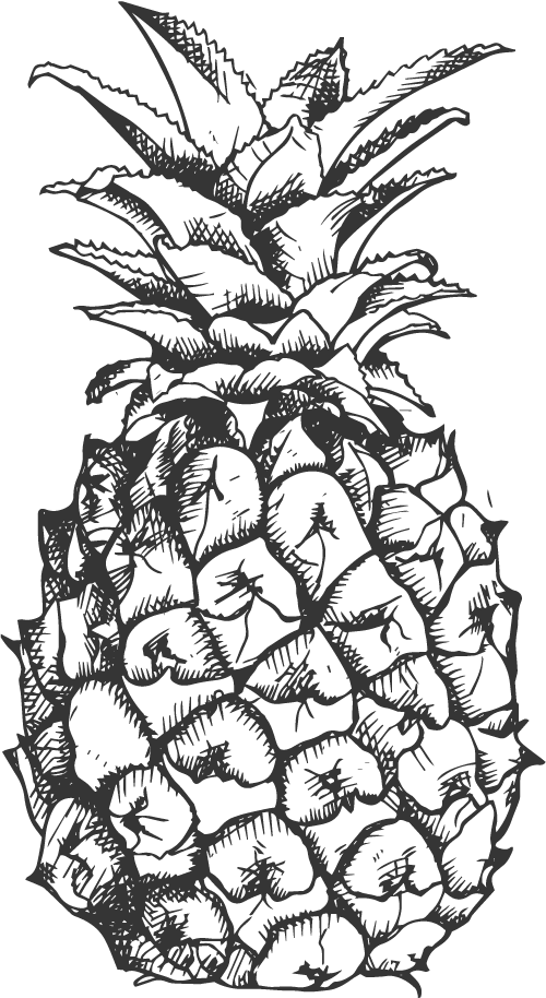 pineapple line drawing pineapple clipart drawn pineapple drawn transparent free pineapple line drawing