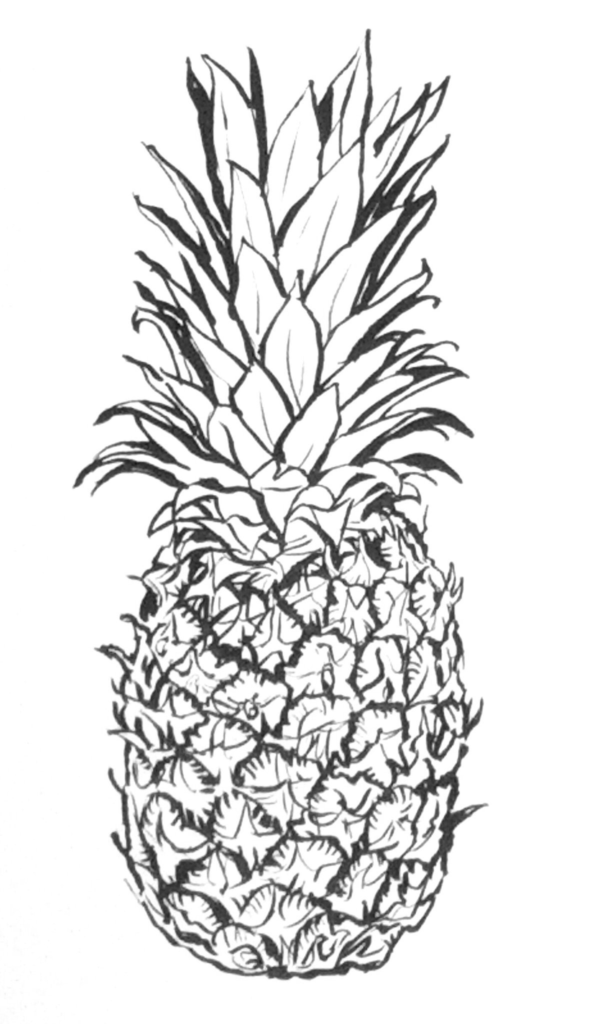 pineapple line drawing pineapple line drawing at paintingvalleycom explore drawing line pineapple
