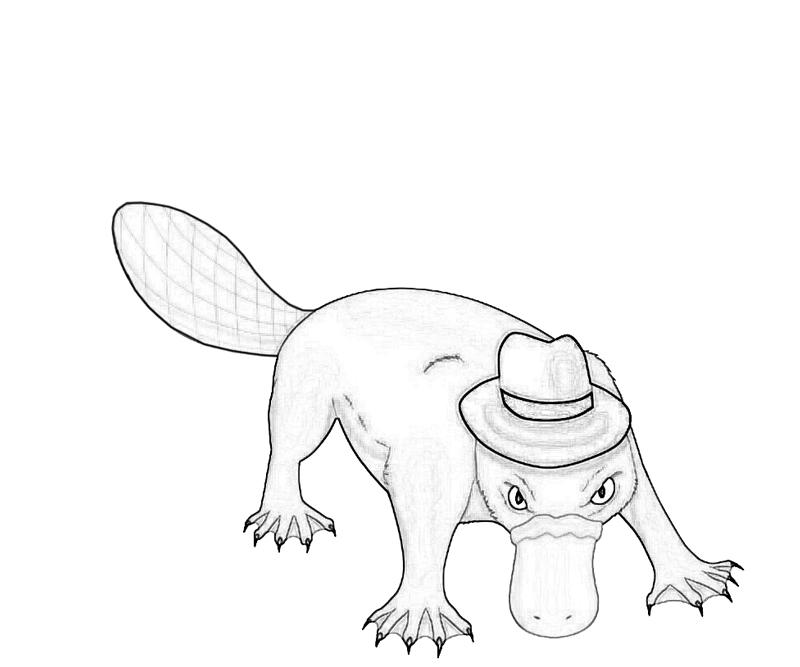 platypus pictures to print platypus coloring page coloring home pictures to platypus print