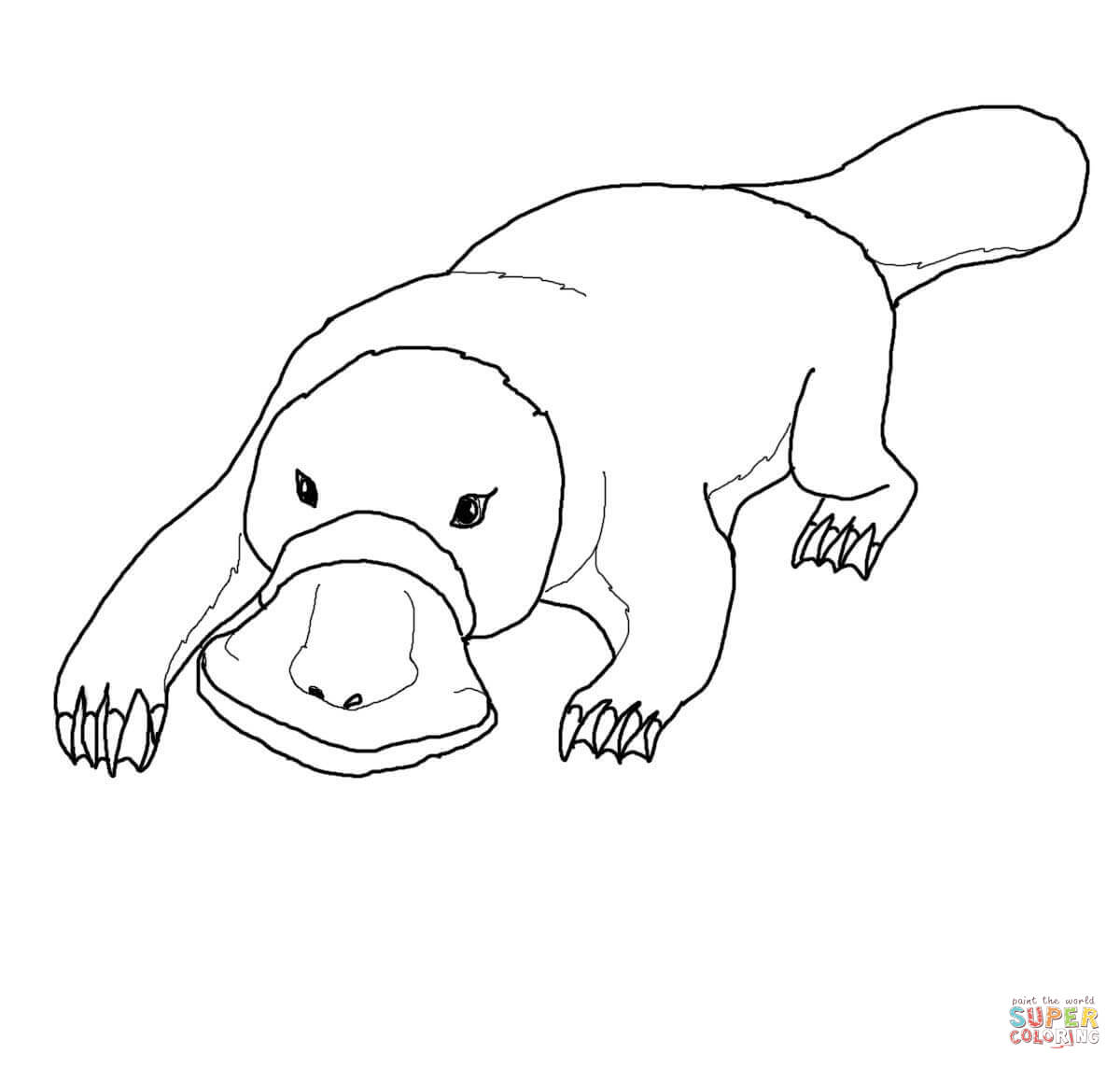 platypus pictures to print platypus coloring page free printable coloring pages platypus pictures to print