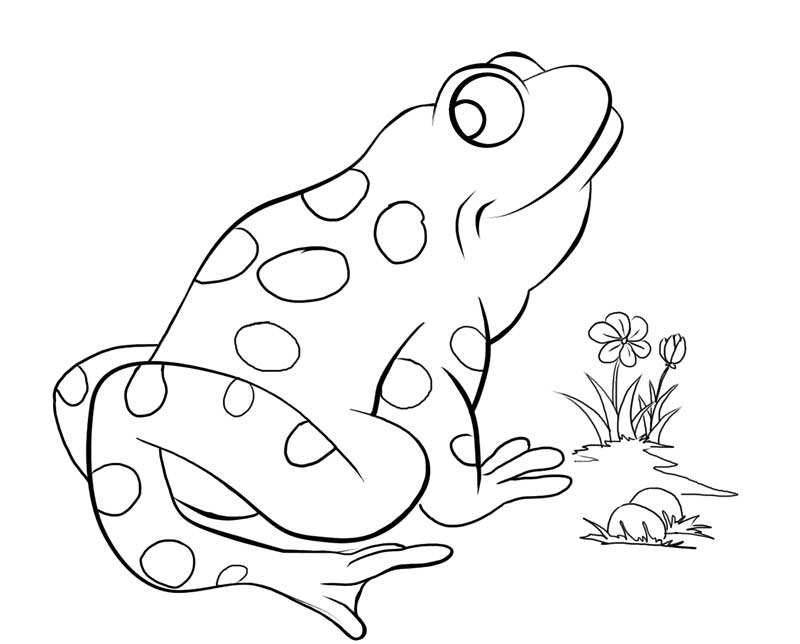 pond coloring pages free coloring pages of a frog in a pond coloring home coloring pond pages