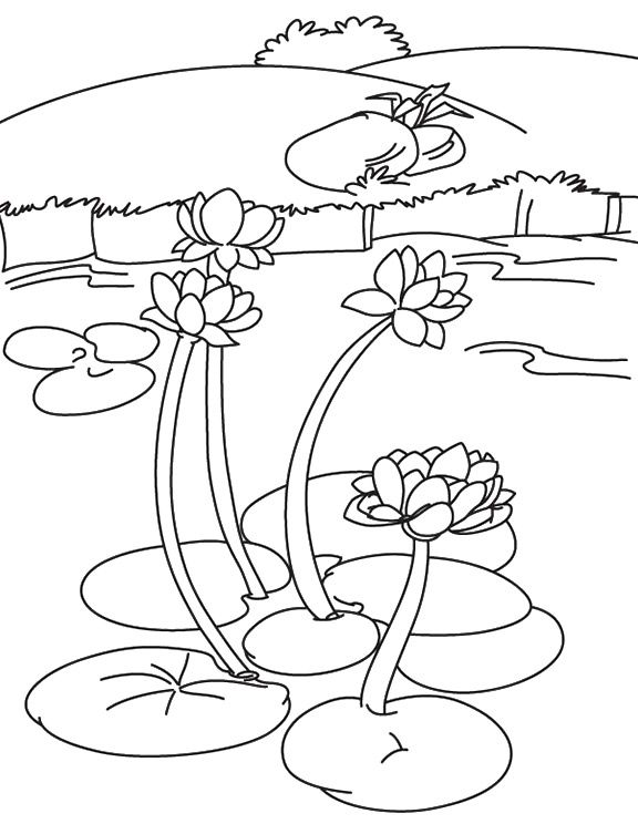 pond coloring pages pin by cynthia walker on pond life in 2020 coloring coloring pond pages
