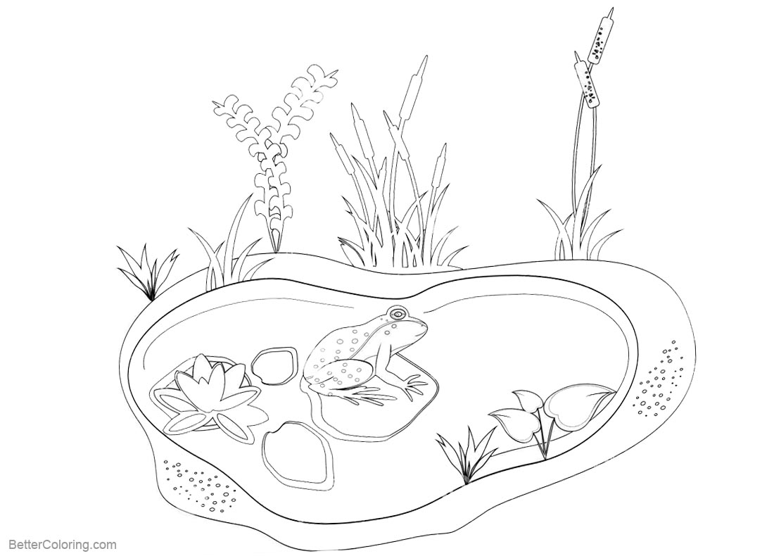 pond coloring pages pond coloring pages animals and plants free printable pond coloring pages