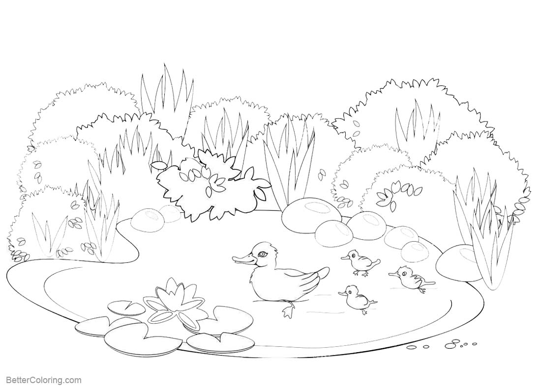 pond coloring pages pond coloring pages happy ducks swimming free printable pond pages coloring