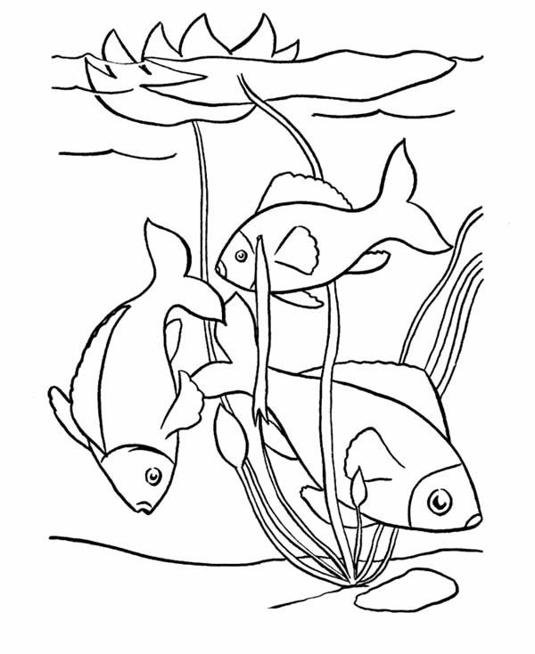 pond coloring pages pond coloring pages storks and frogs free printable coloring pages pond