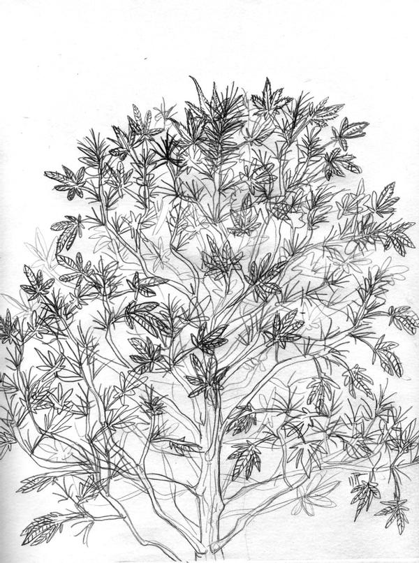 pot plant drawing a young plant sketch by hiddenstash on deviantart plant drawing pot