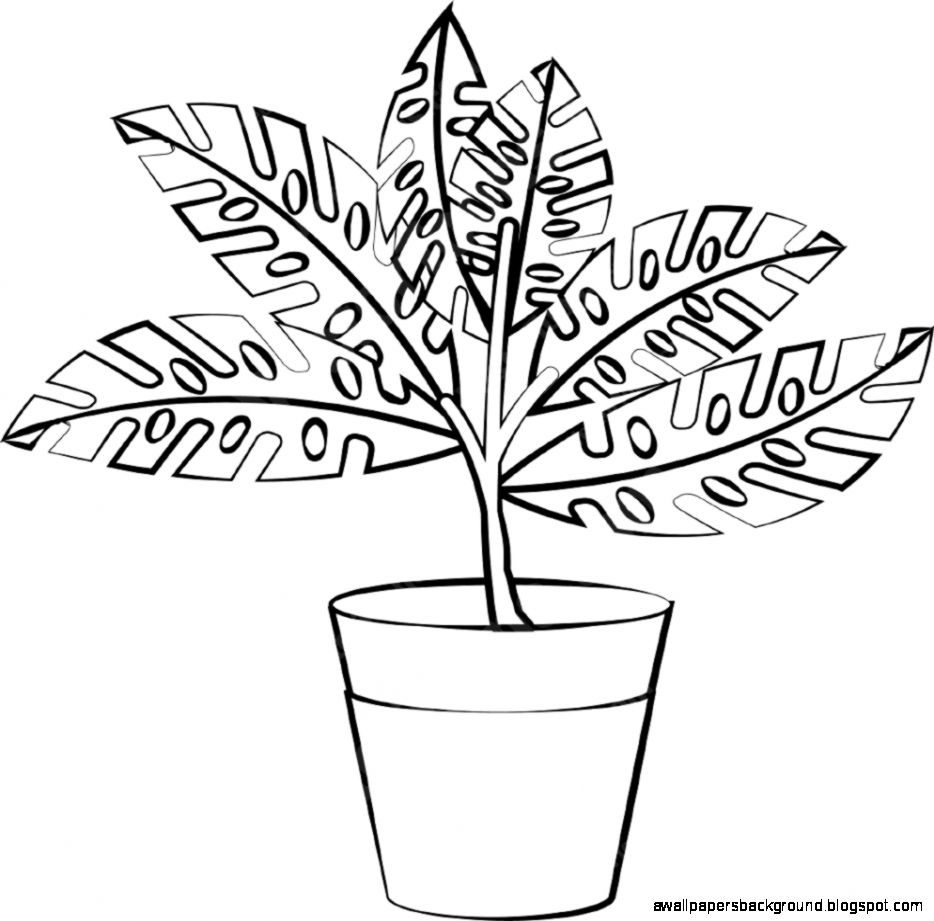 pot plant drawing potted plant drawing at getdrawings free download plant drawing pot