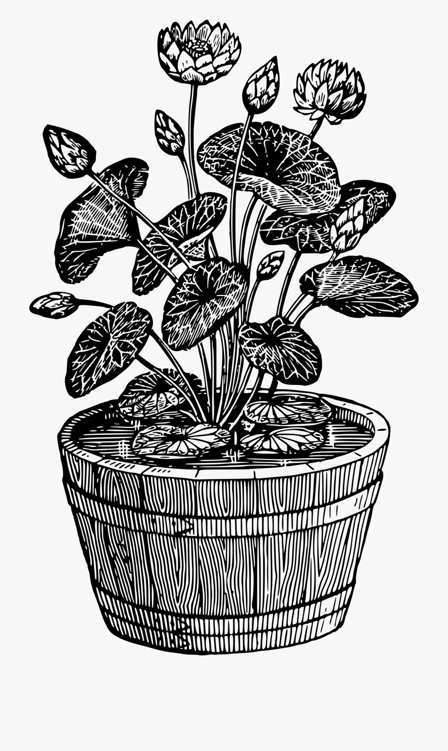 pot plant drawing potted plant drawing at getdrawings free download pot plant drawing