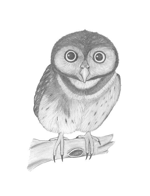 print owl pictures owl coloring pages owl coloring pages pictures owl print