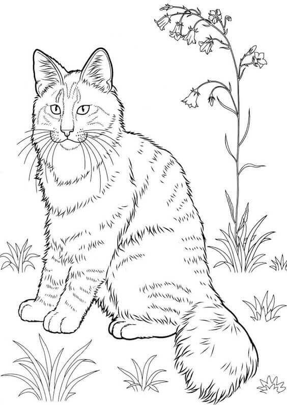 printable cat coloring pages cute cat coloring pages to download and print for free coloring pages printable cat
