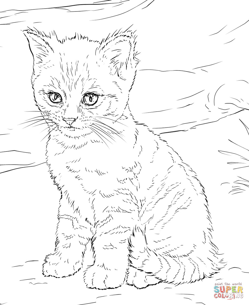 printable cat coloring pages sleeping cat coloring pages at getcoloringscom free coloring printable cat pages