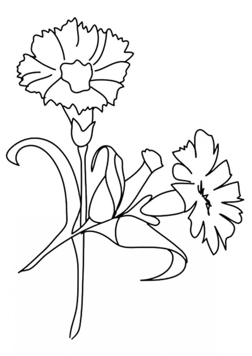 printable flowers coloring pages 7 best images of printable tropical flowers free printable flowers pages coloring