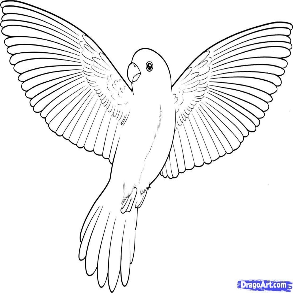 printable images of birds bird coloring pages birds printable images of