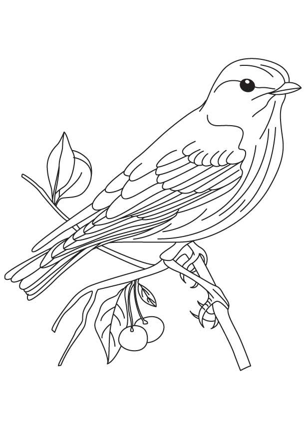 printable images of birds bird full of details animal coloring pages for kids to birds printable of images