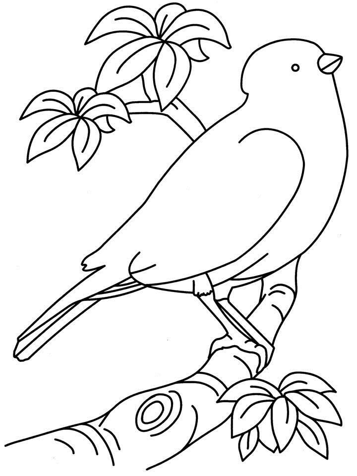 printable images of birds bird outline printable coloring home images printable birds of