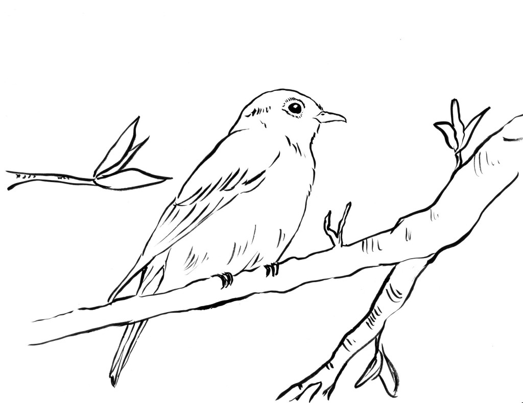 printable images of birds cute bird coloring page for kids tsgoscom of printable birds images