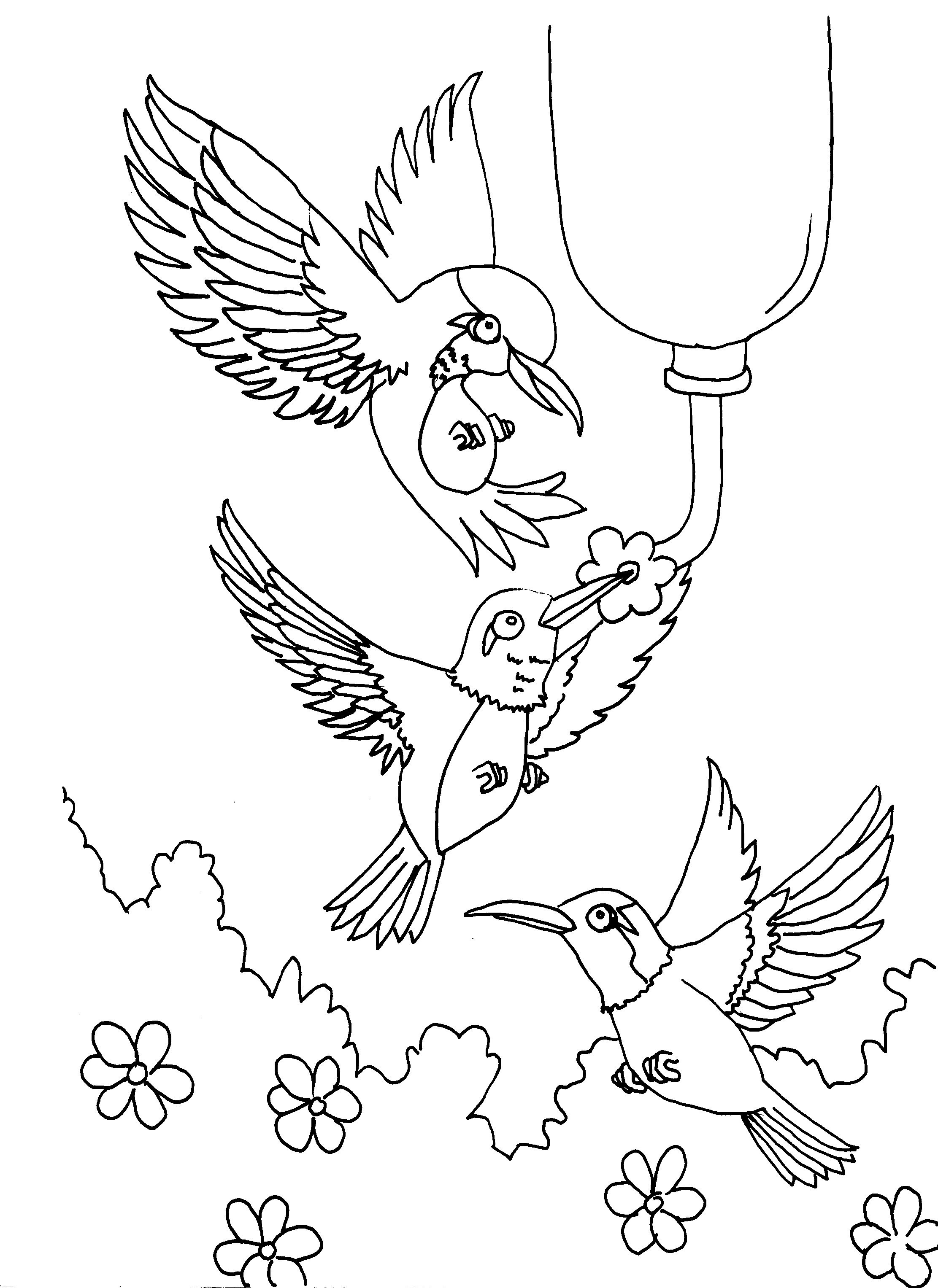 printable images of birds free printable hummingbird coloring pages for kids printable birds of images