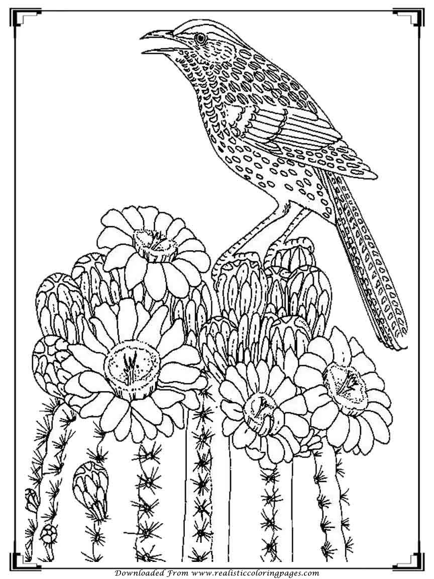 printable images of birds printable birds coloring pages for adults realistic of printable birds images