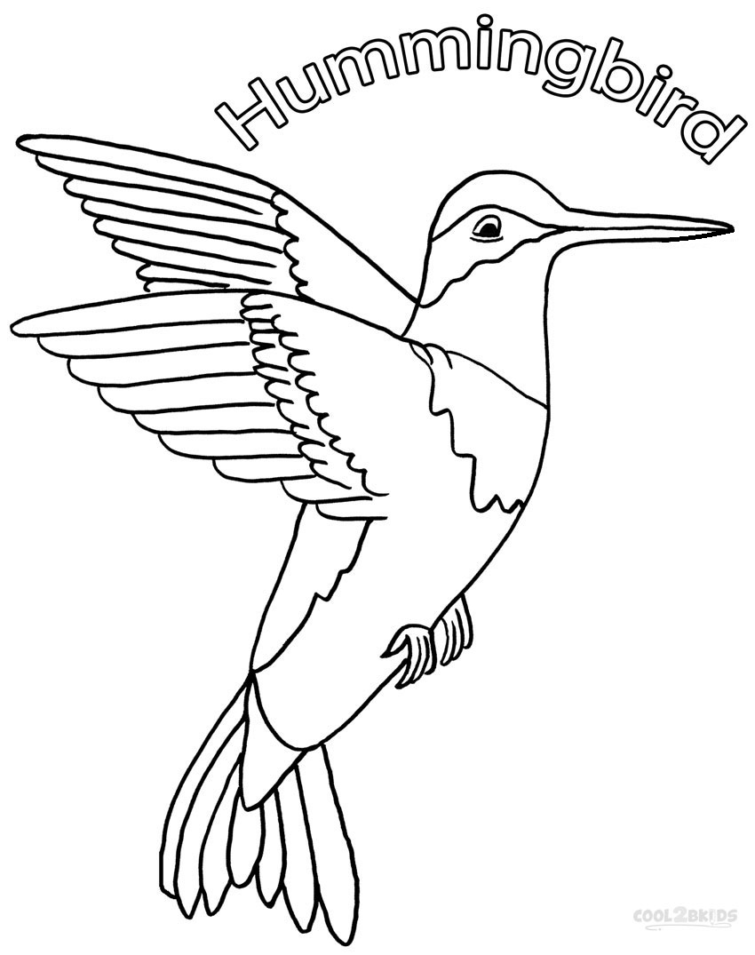 printable images of birds printable hummingbird coloring pages for kids cool2bkids printable images birds of