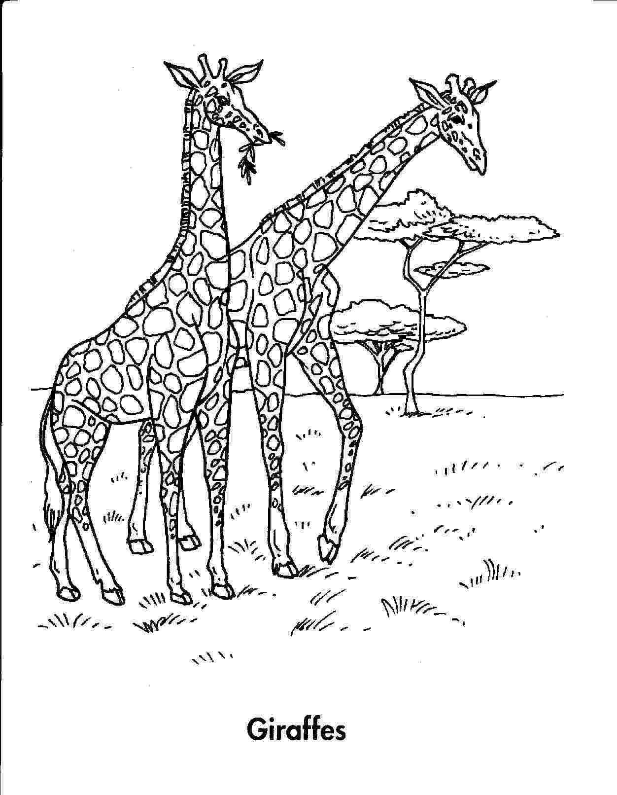 printable jungle animals coloring pages jungle coloring pages to download and print for free coloring animals printable pages jungle