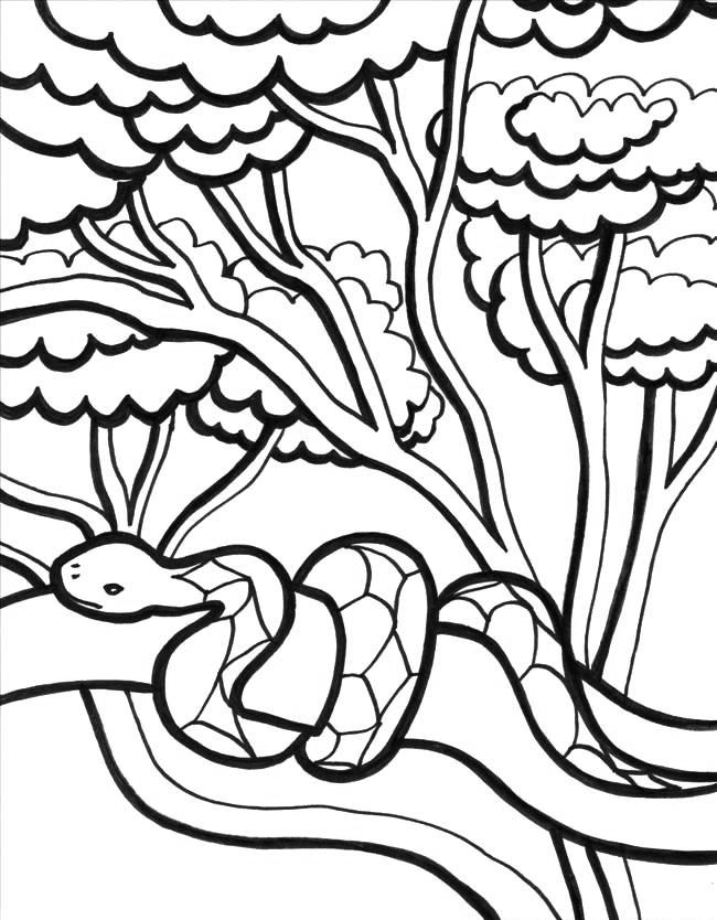 printable jungle animals coloring pages realistic jungle animal coloring pages realistic jungle printable coloring animals pages