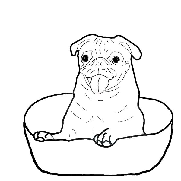 pug coloring pages 8 best pig the pug teaching notes images on pinterest pages coloring pug