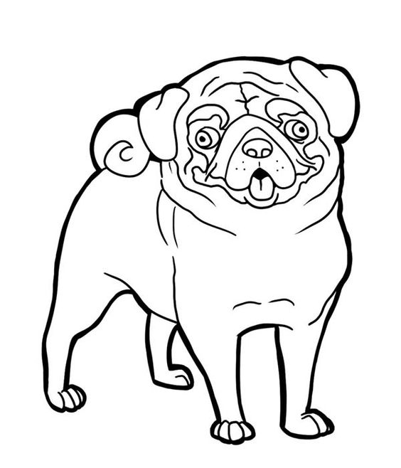 pug coloring pages adult coloring pages pug at getdrawings free download pages coloring pug