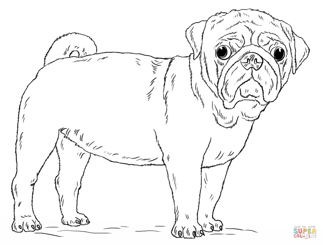 pug coloring pages pug coloring pages to download and print for free pug coloring pages