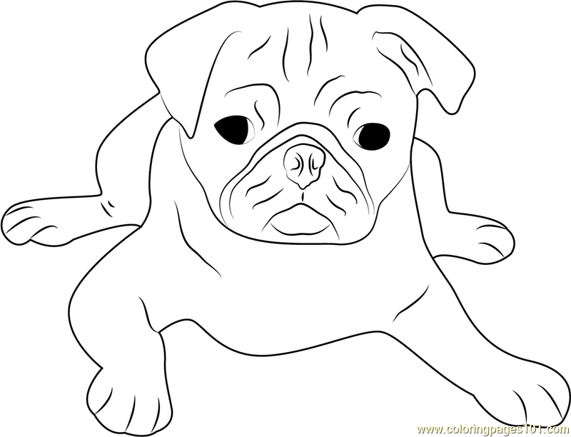 pug puppy coloring pages cute pug face coloring page free dog coloring pages pug puppy coloring pages