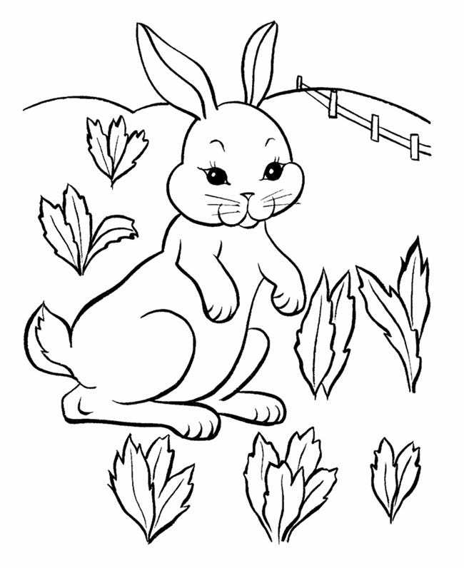 rabbit images for colouring easy easter bunny coloring pages at getcoloringscom images colouring rabbit for