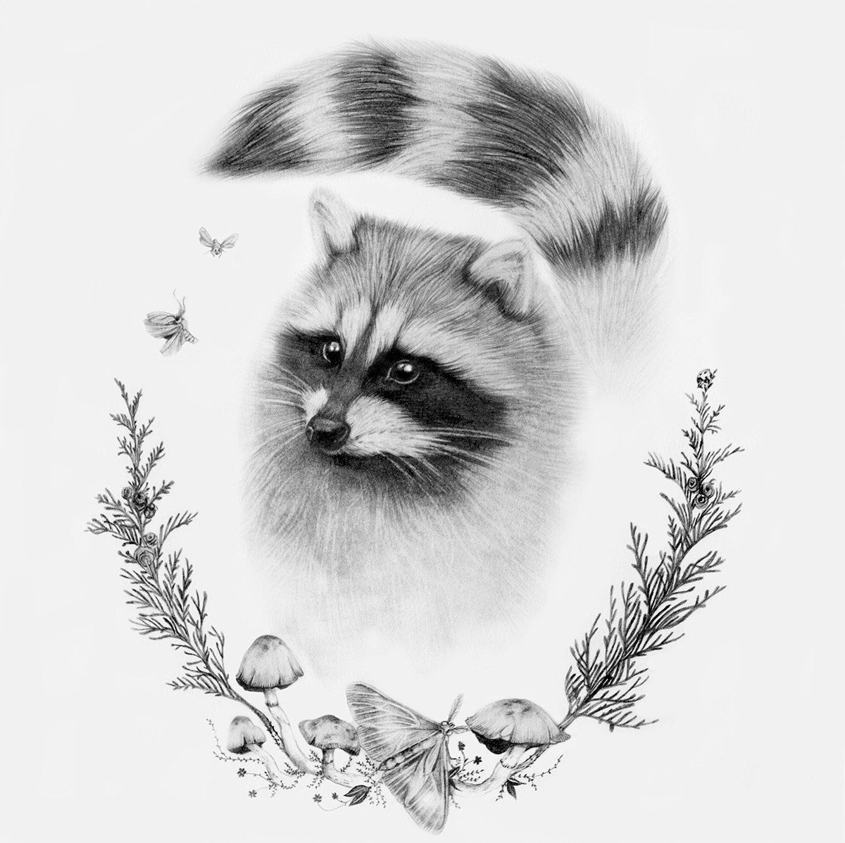 raccoon drawing 275 best images about raccoons drawings and paintings of drawing raccoon 1 1