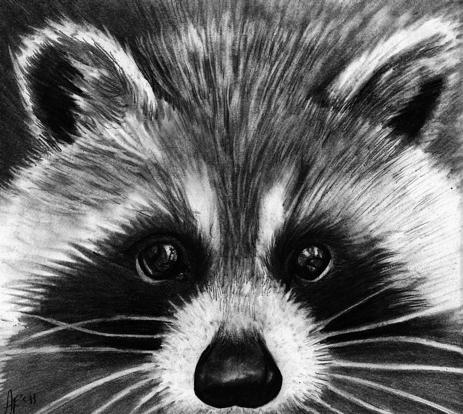 raccoon drawing my thesis is not a book confessions of a lutheran raccoon drawing