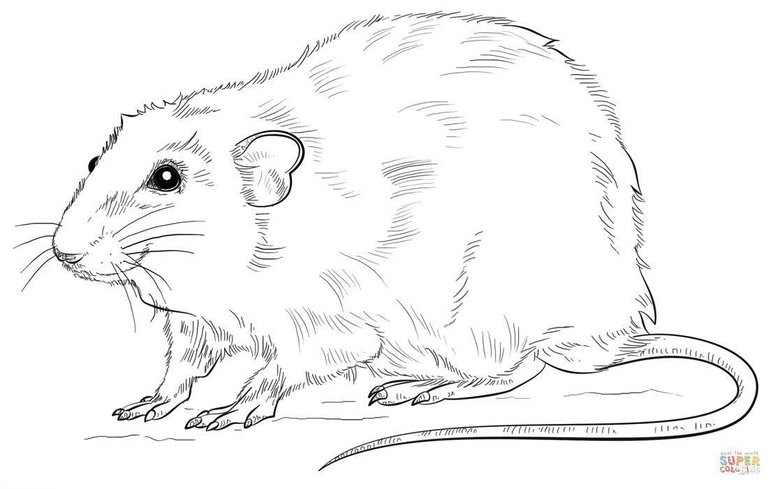 rat images for kids already colored free printable rat coloring pages for kids rat images kids for