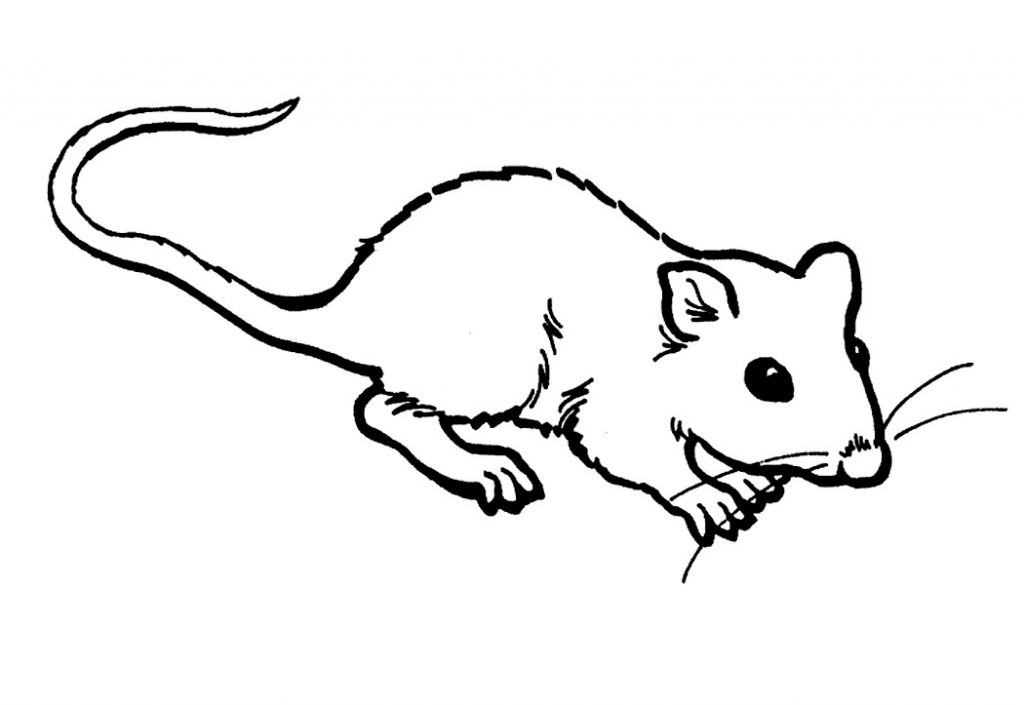 rat images for kids cartoon rat drawing at paintingvalleycom explore kids for images rat