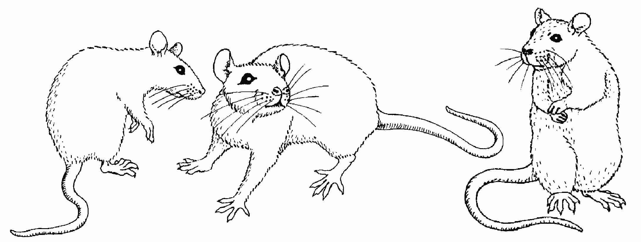 rat images for kids how to draw cartoon rat for kids beginners pencil images kids for rat